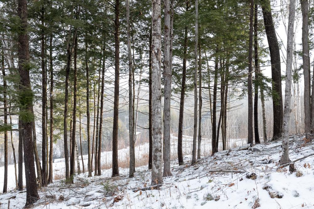 Trees #22