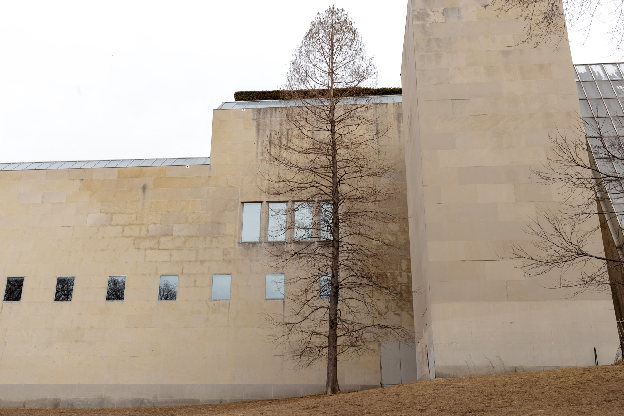 Tree Behind the Museum