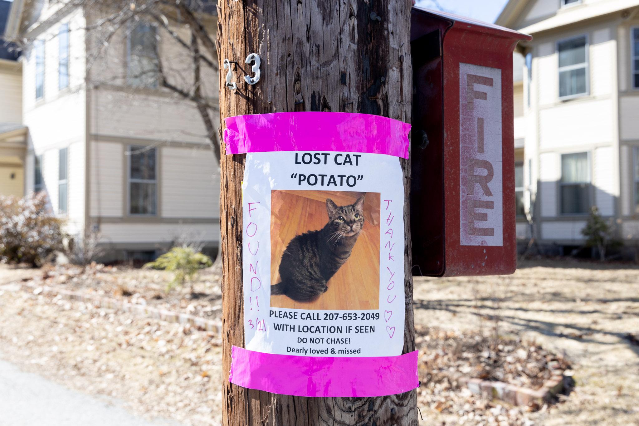 Lost Cat - Potato - Found!