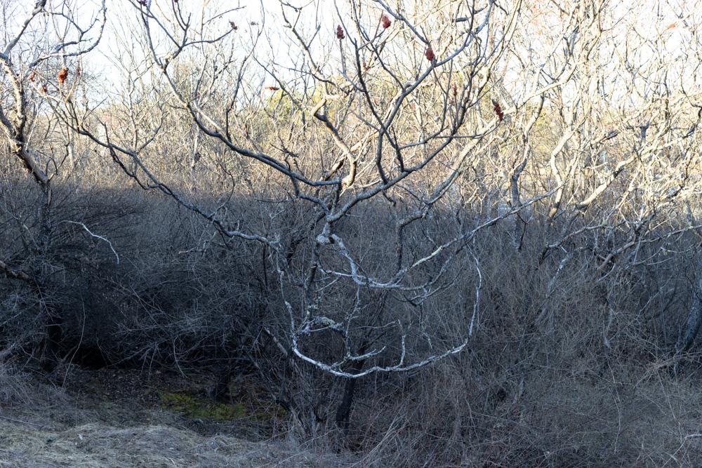 Trees #29