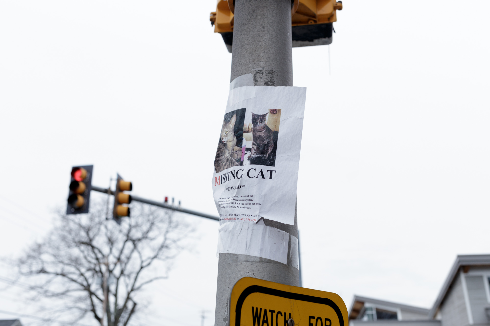 Missing Cat - Traffic Light
