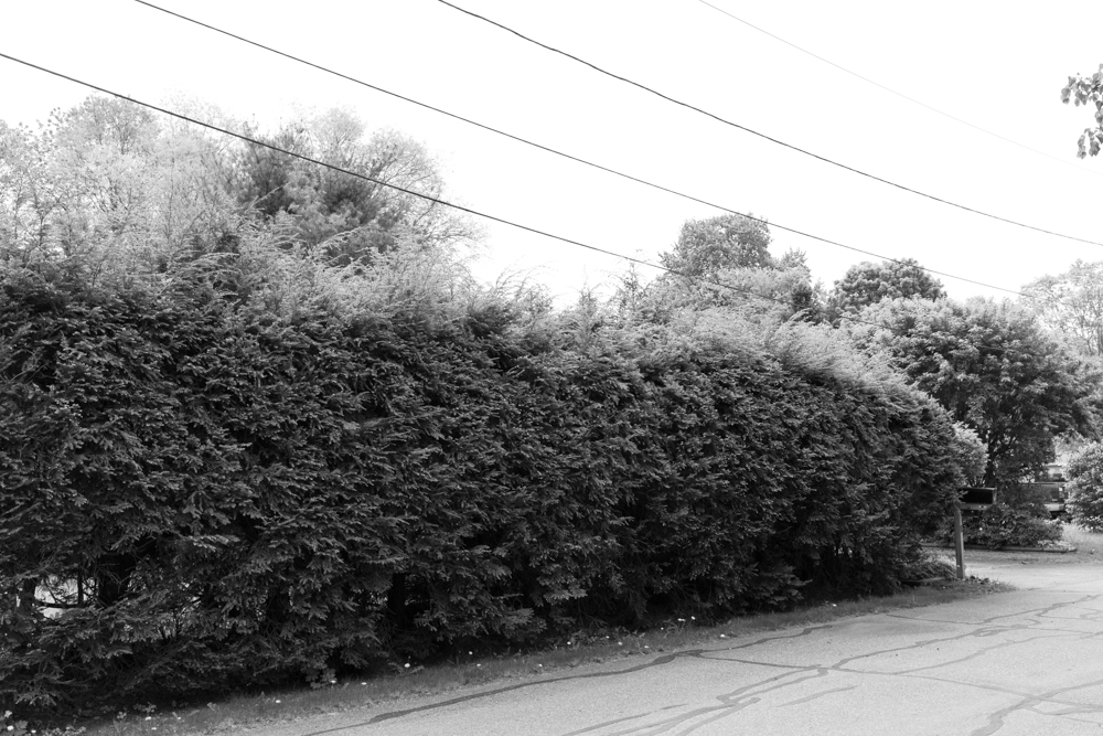Bushes with Mailbox