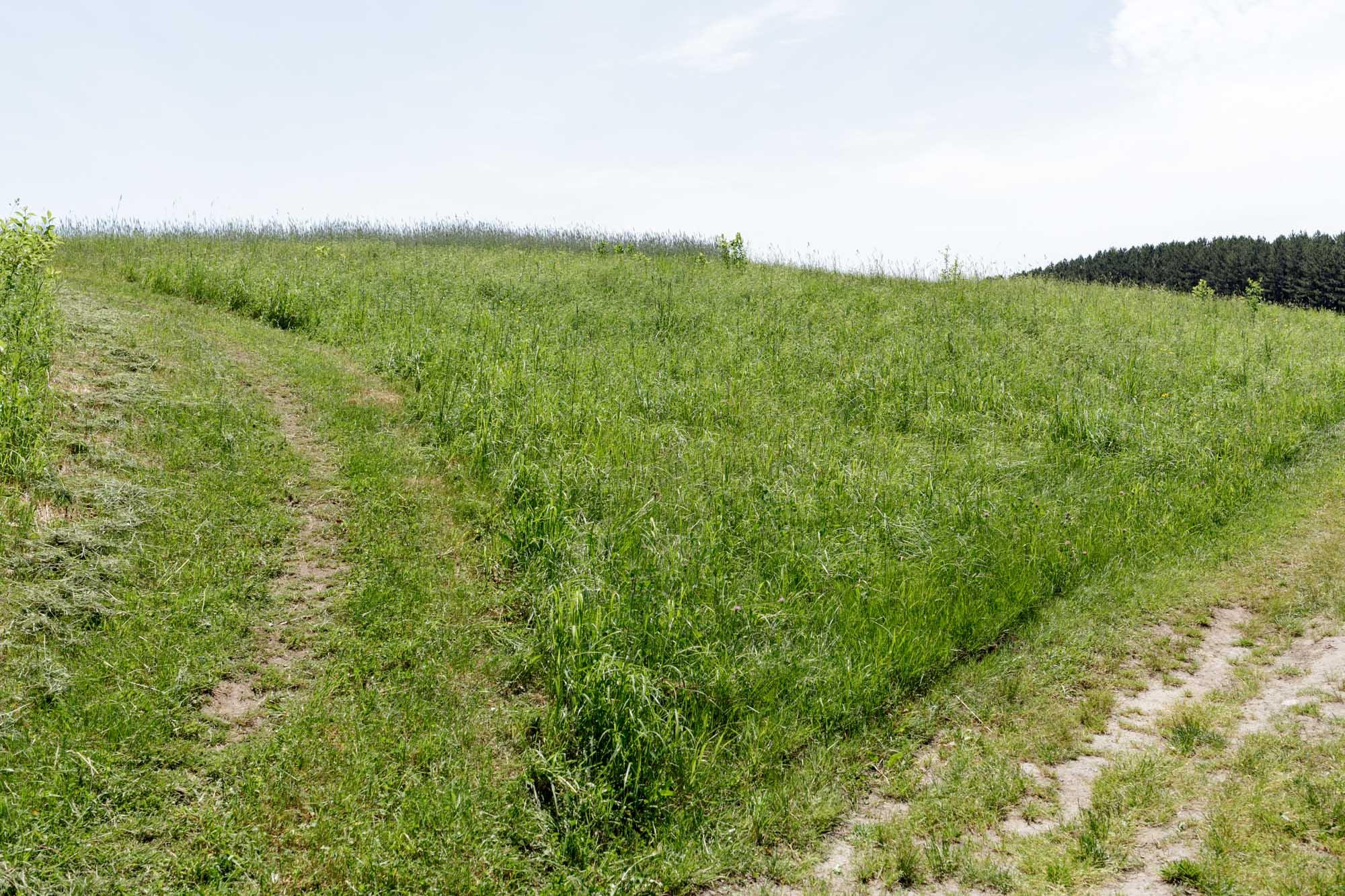 Two Roads in a Field