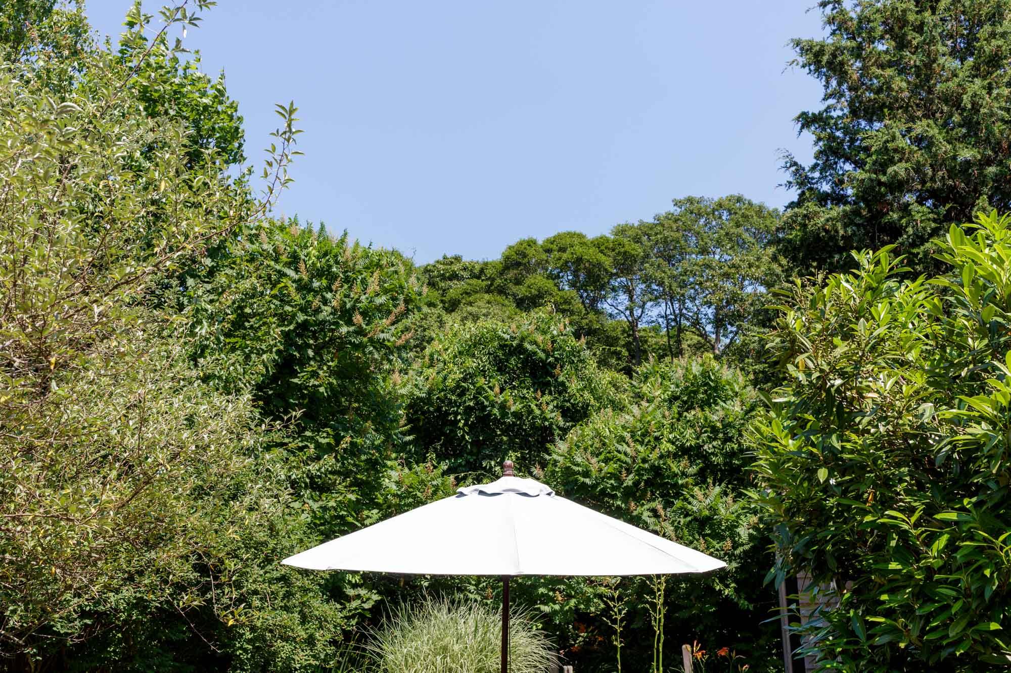 Sun Umbrella and Trees