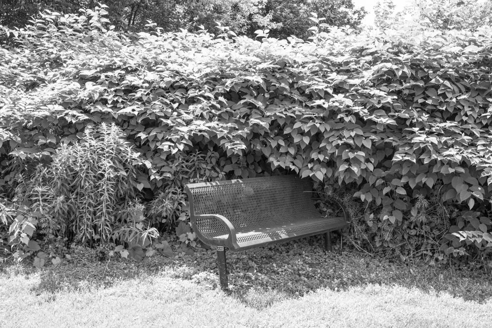Bench and Bush