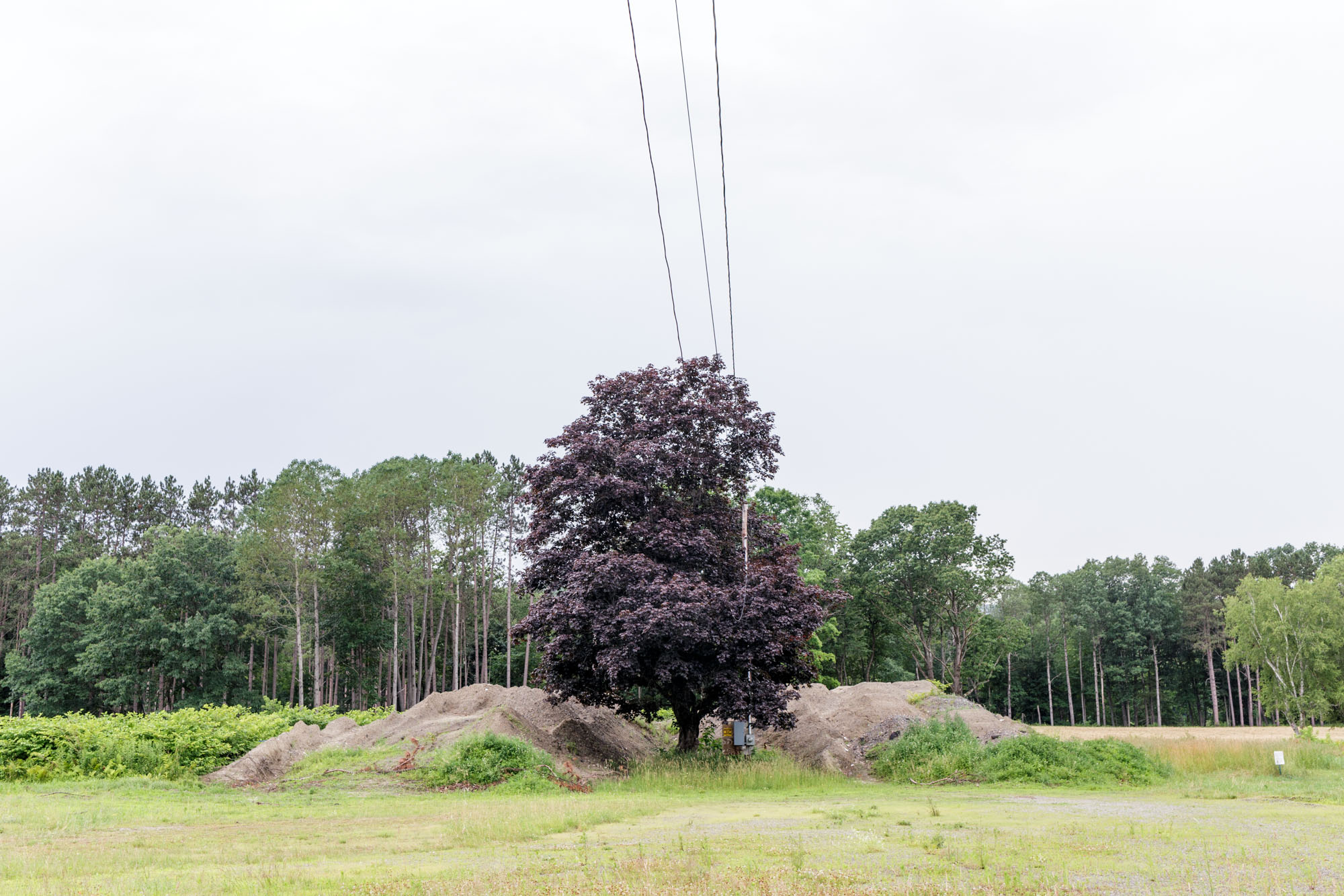 Tree in Field with Power Lines