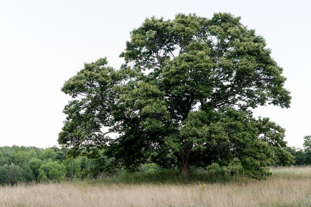 Trees #28