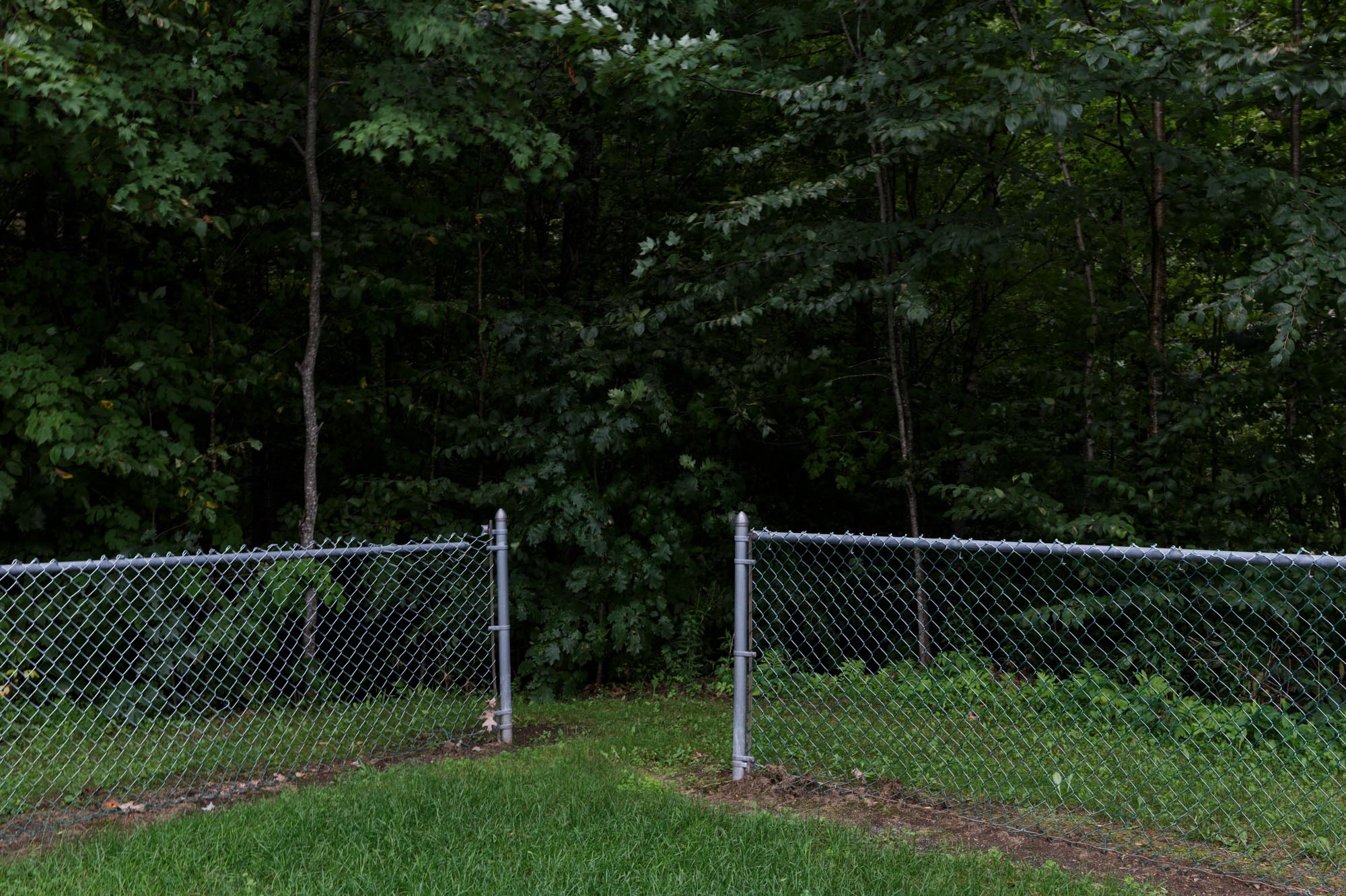 Fence in Front of Trees