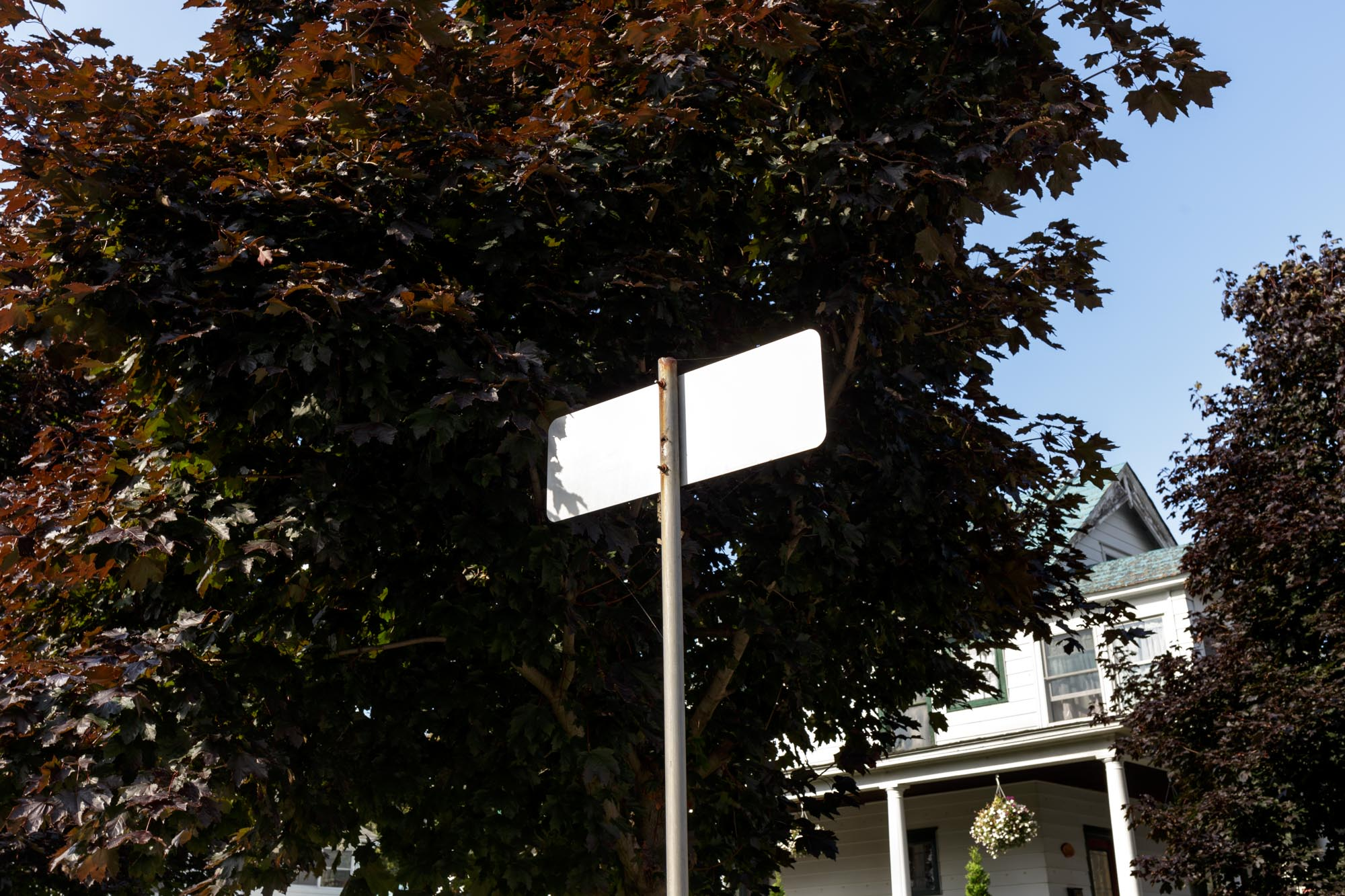 Street Sign and Trees