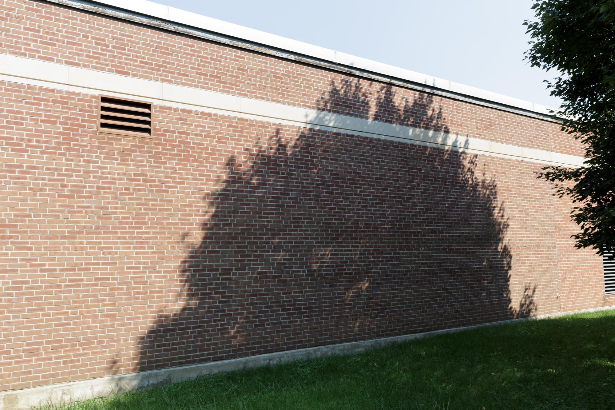Tree Shadow on Wall