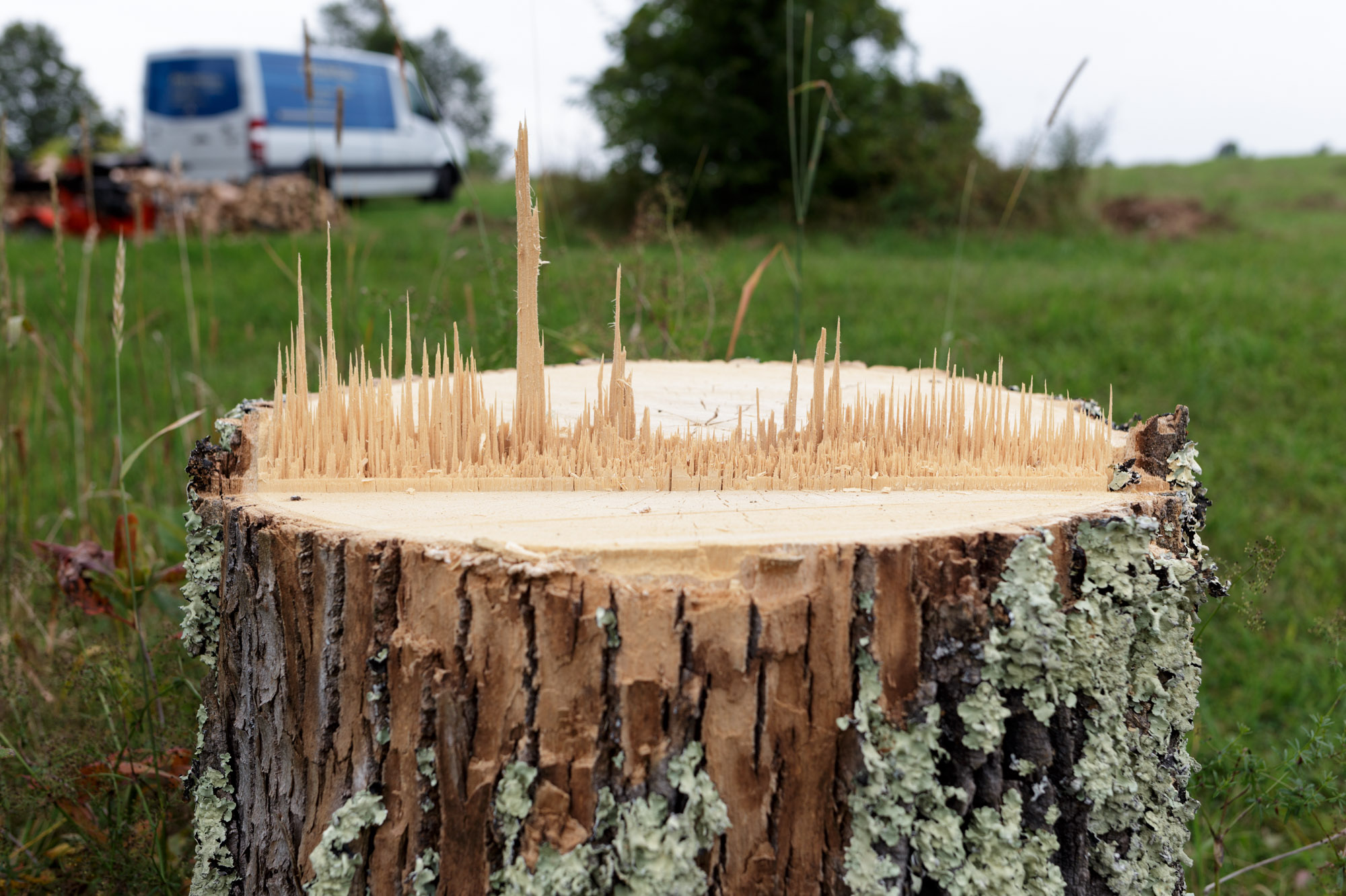 Stump Cityscape