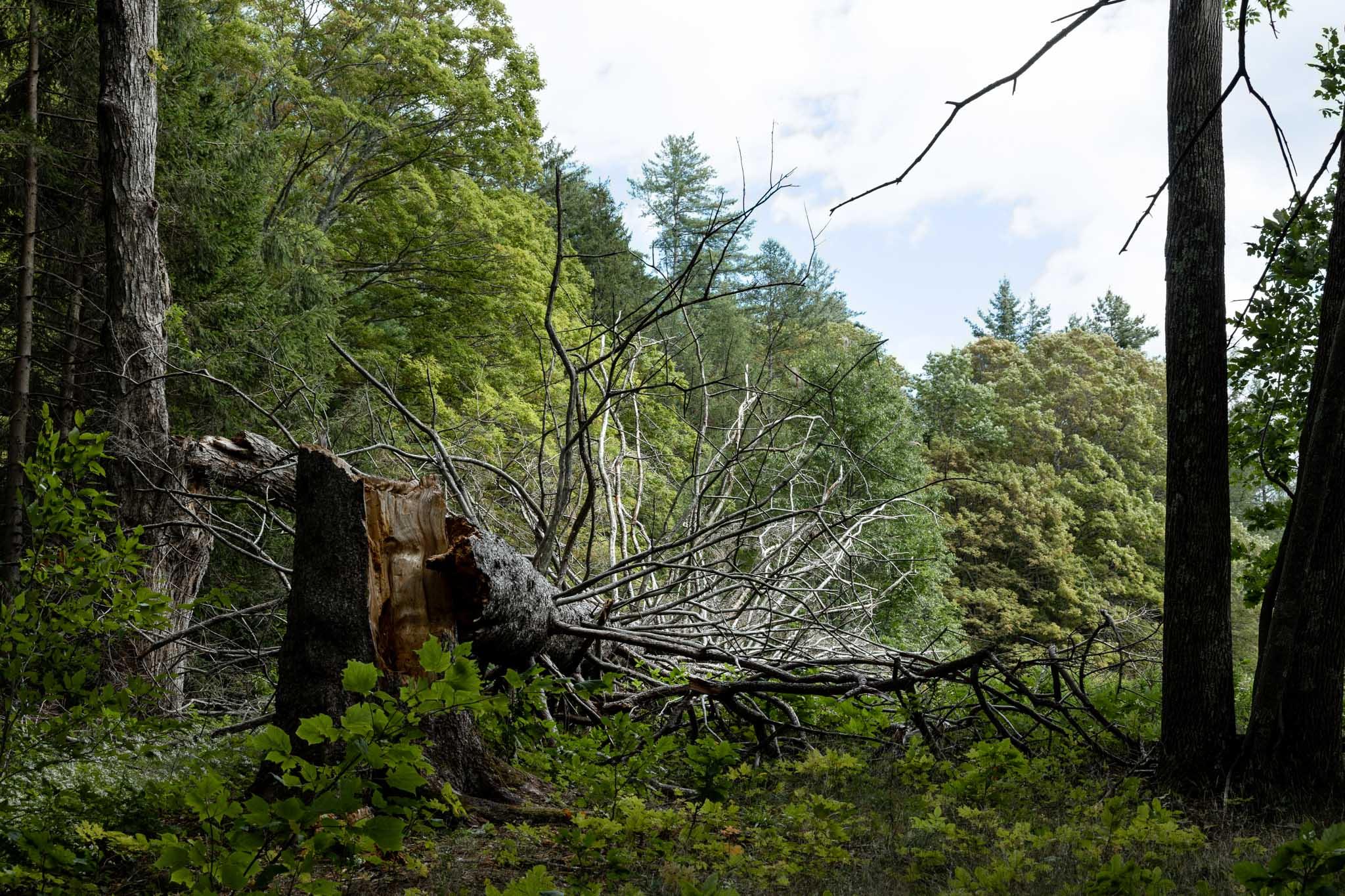 Trees #18