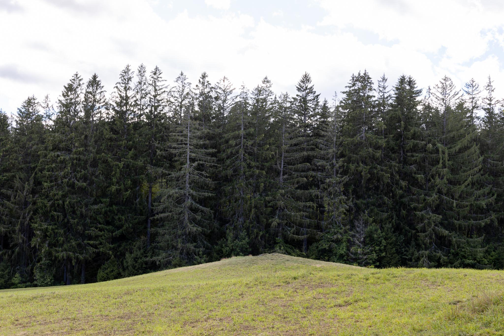 Trees #17
