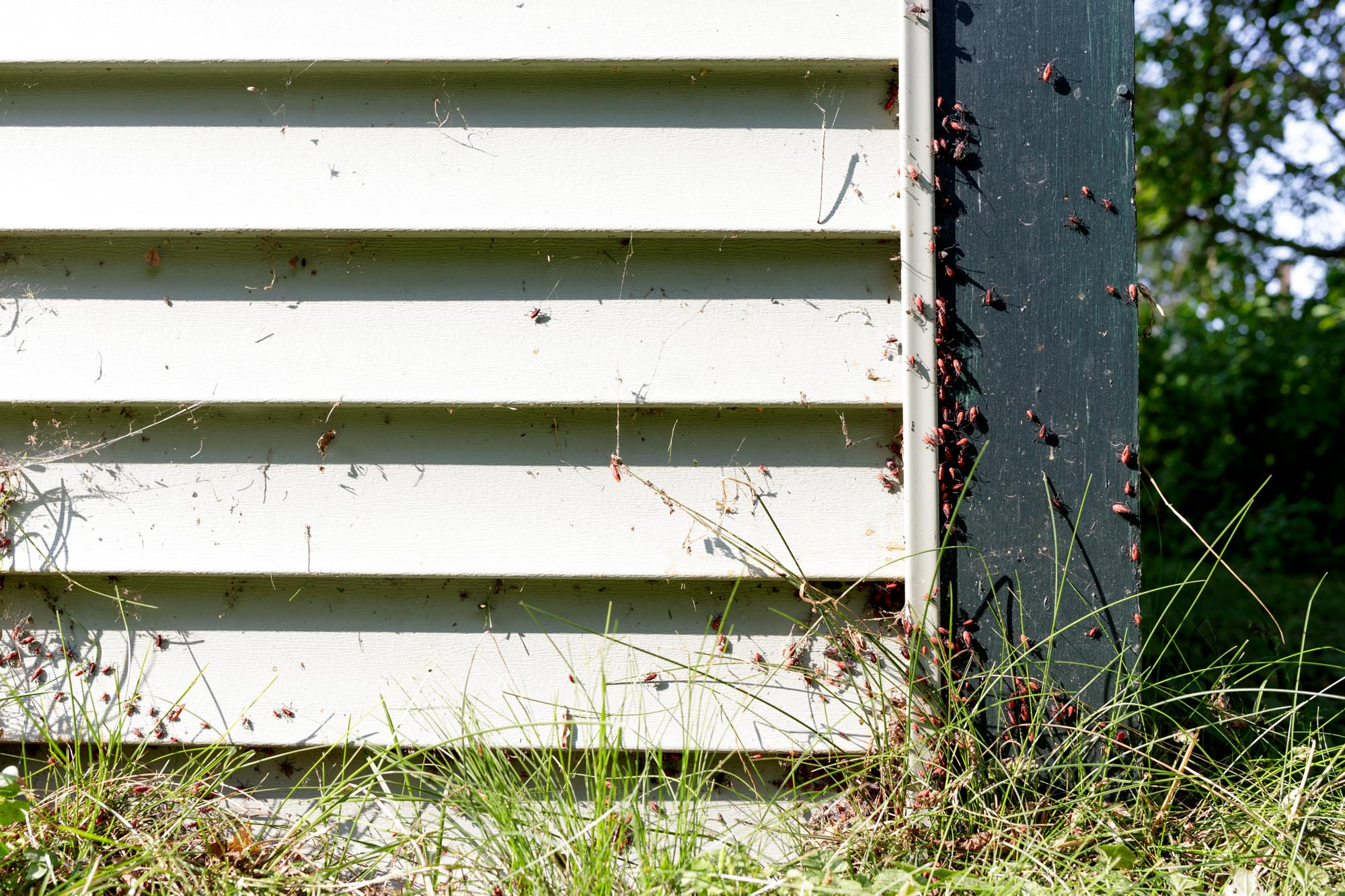 Bugs, Grass, and Siding