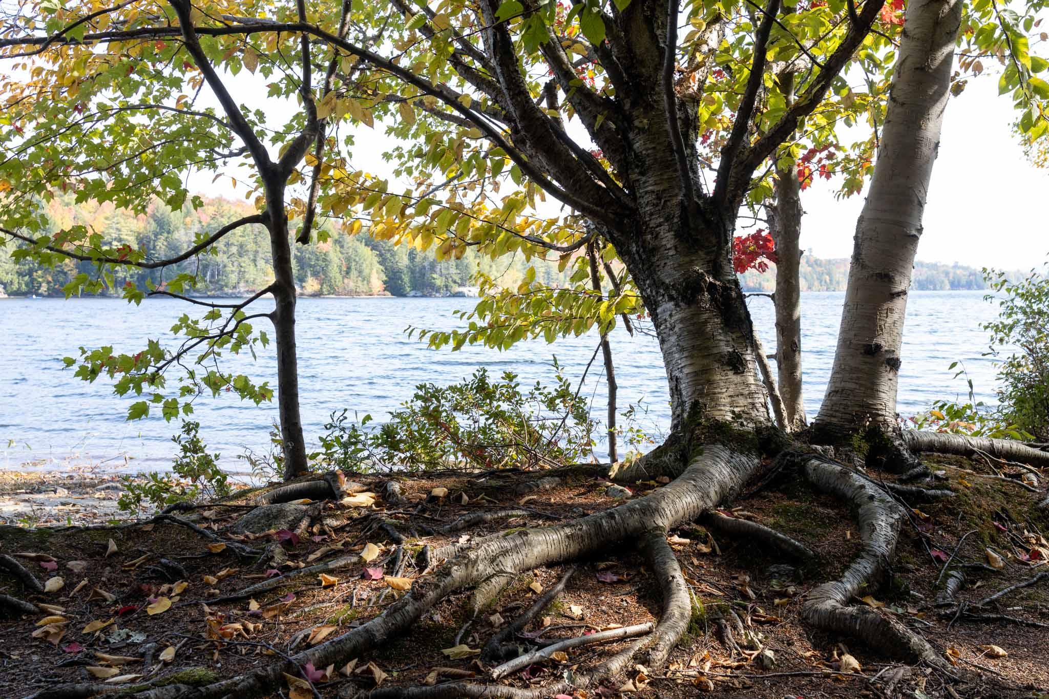 Trees #19