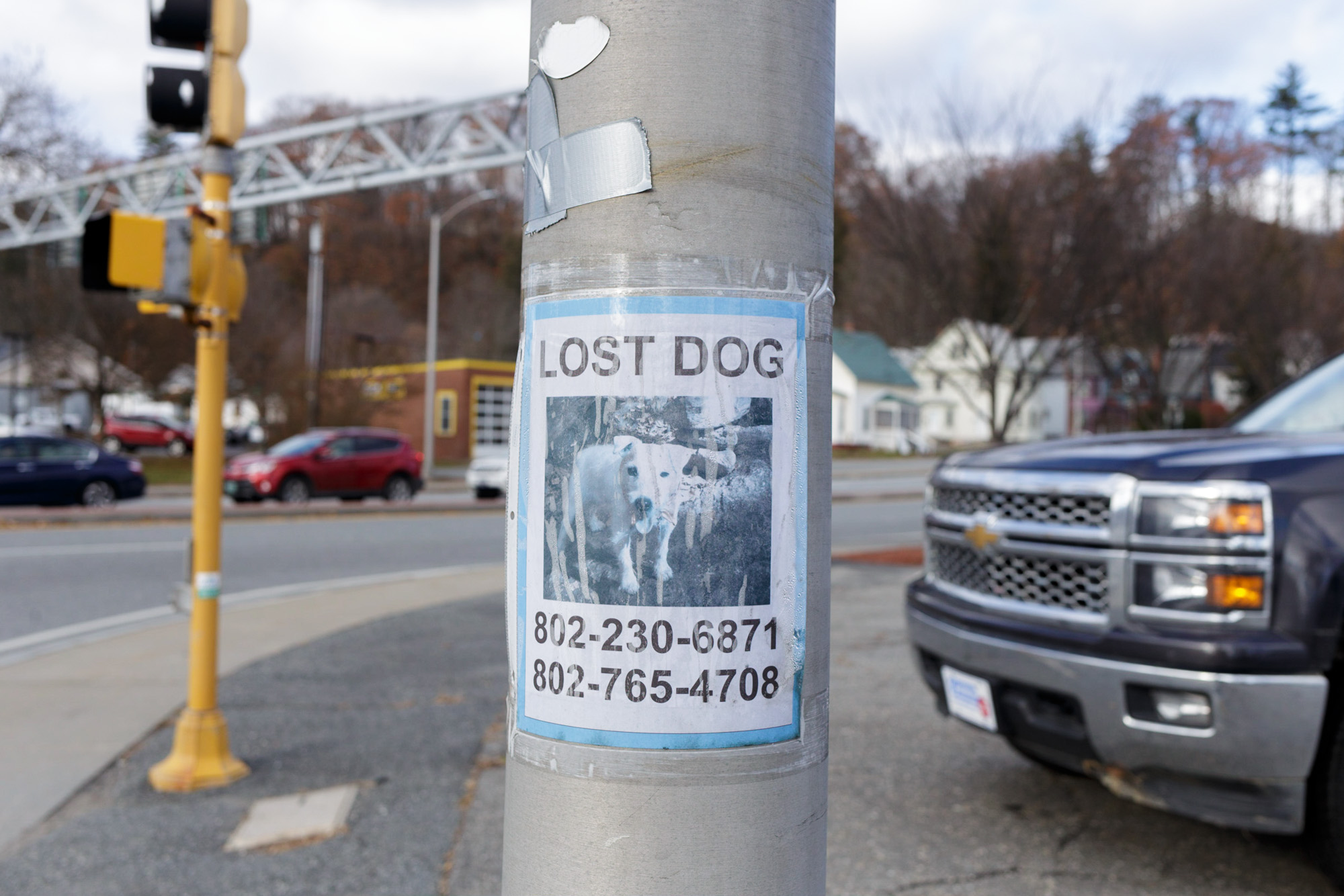Lost Dog - Blue
