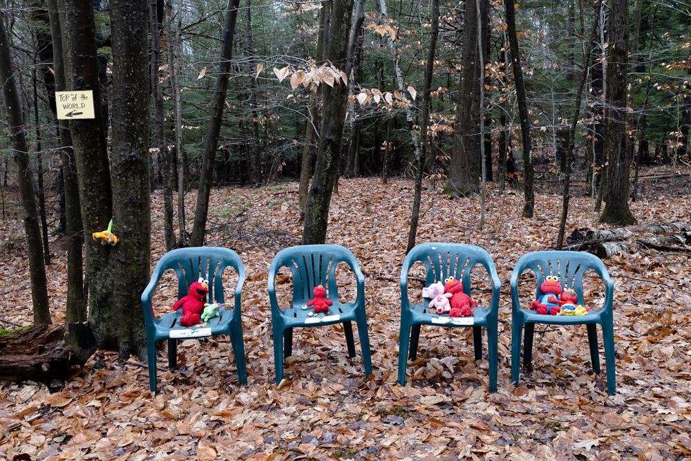 Elmos in the Woods