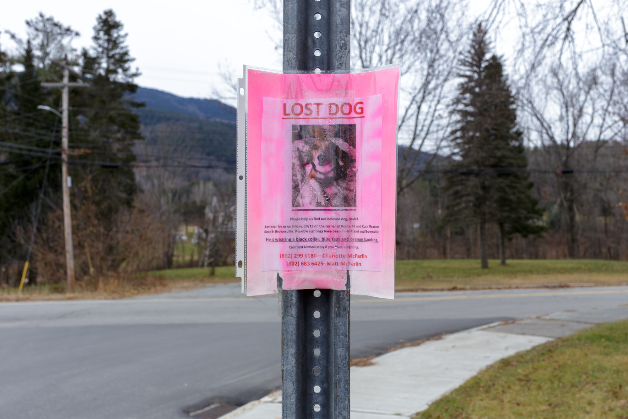 Lost Dog - Pink